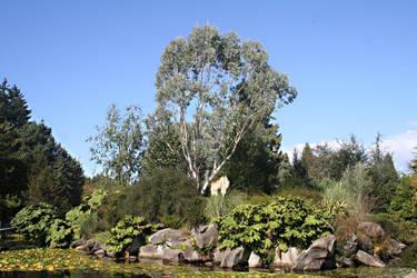 Landscape by BreezeStock