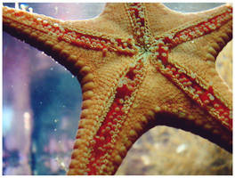 starfish by paintspills