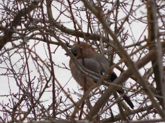 Birds around winter by RailRoutes