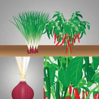 Vectorizing Onion and Pepper by ayamsuhayam
