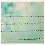 6 x 6 Vintage Birds on a wire by Moon-Willow