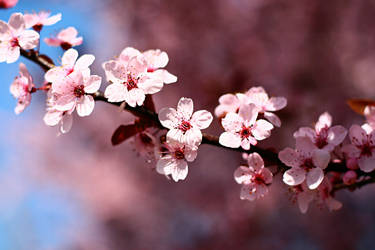 Grandmothers Spring 2010 by Moon-Willow