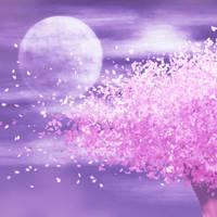 cherry night by aku-jg