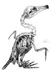 Cormorant skeleton by MalaMi95