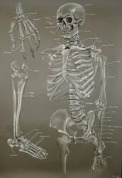 Skeleton Study by Zaree-Nilerabanwen