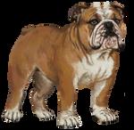 Bulldog Comm by Asteltainn
