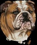 Bulldog Comm Portrait by Asteltainn