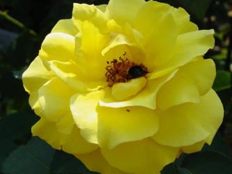 yellow by angelasashes