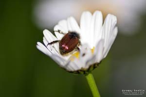 Dreamy Beetle by Luton