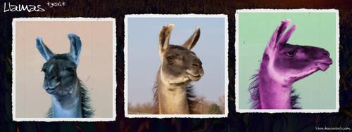 Llamas :YEAH: by Luton