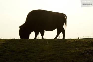 Buffalo by Luton