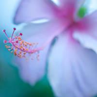 Macro : Love Lies by silverroses222