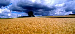 Fields by alexmagdesign
