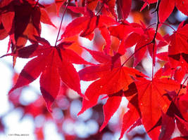 When the leaves turn red by Mogrianne