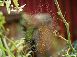 Web of Pearls by Mogrianne