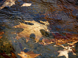 Oak leaves in the river by Mogrianne