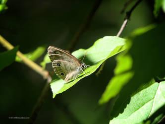 Skipper on a Leaf by Mogrianne