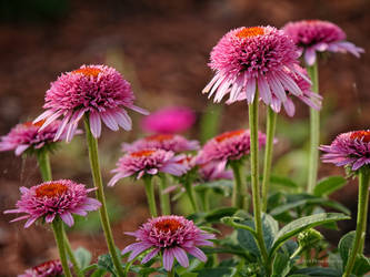 Pink and orange flowers by Mogrianne