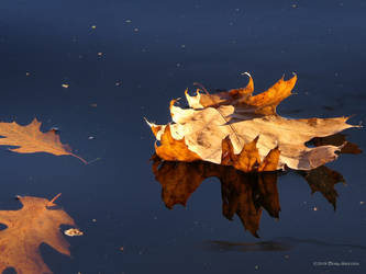 Autumn's resting place by Mogrianne