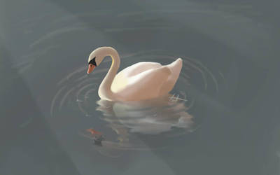 Swan in the Lake by Gabor2600