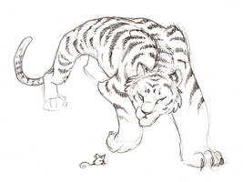 A Tiger for Dutchess by dhstein