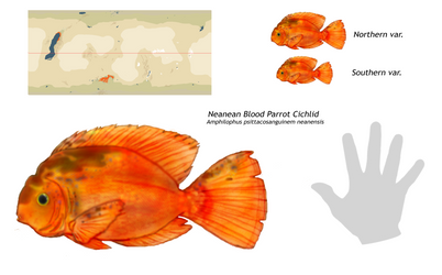 Neanean Blood Parrot Cichlid by mightycucumber