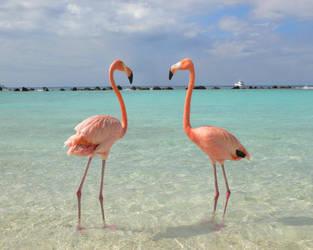 Flamingos by whoknows61