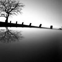 tree 09 by Hengki24