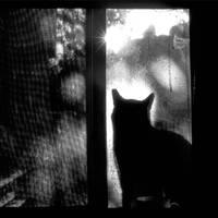 Cat by Hengki24
