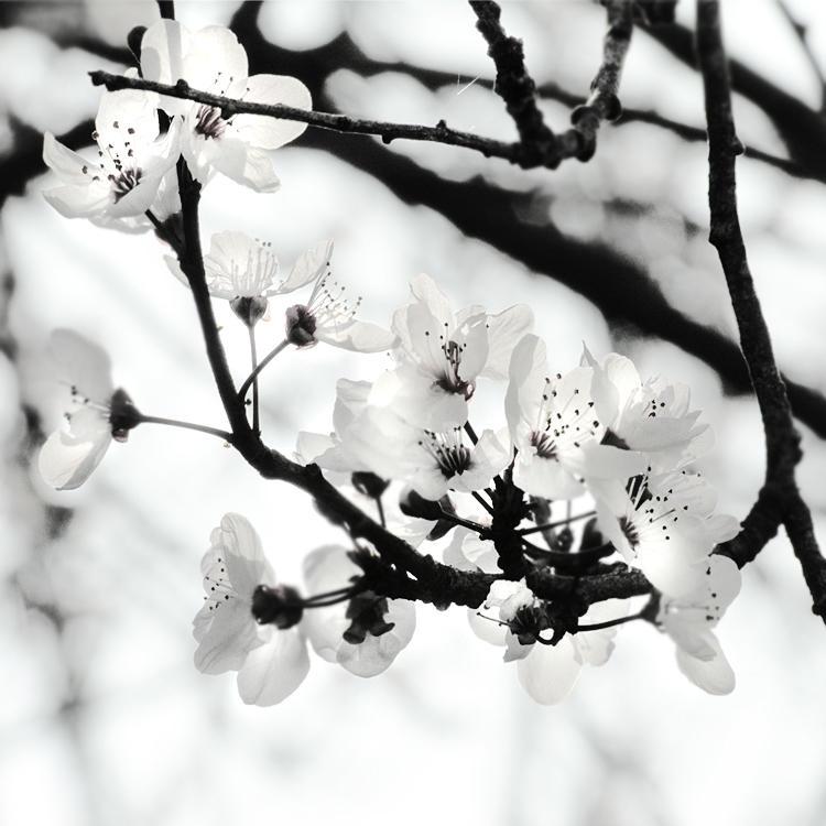 tree 25 by Hengki24