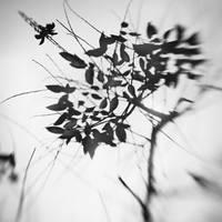tree 26 by Hengki24