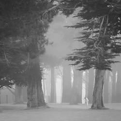 Misty Tai Chi by Hengki24