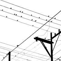 birds on wires by Hengki24