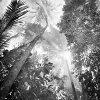 tree 67 by Hengki24