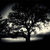 tree 76 by Hengki24