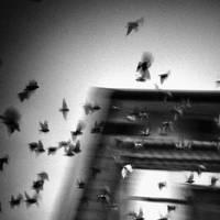 Cuckoo's Nest by Hengki24
