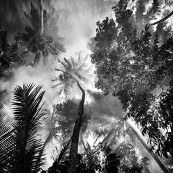 Foliage by Hengki24