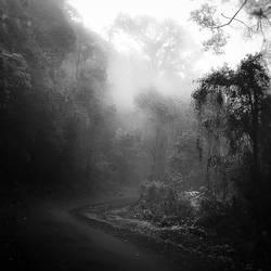 Forest by Hengki24