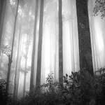 Thin Light by Hengki24