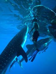 Hasselblad Master 2014 - Underwater by Hengki24