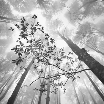 Trees by Hengki24