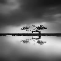 Mangrove - The Tree of Hope by Hengki24