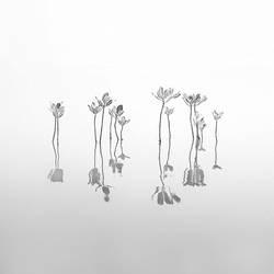 Mangrove Trees by Hengki24