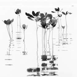 Mangroves Rhythm by Hengki24