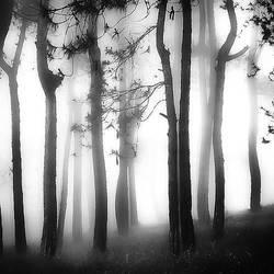 White Light by Hengki24