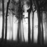 White Lights by Hengki24