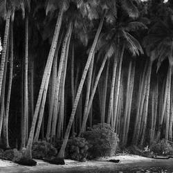 Coco Land by Hengki24