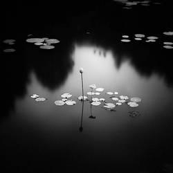 Lotus by Hengki24