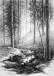 forest interior by hipiz