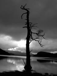 lone tree by chikinNrice